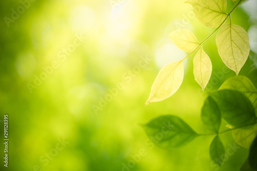 Closeup nature view of green leaf on blurred greenery background in garden with copy space using as background natural green plants landscape, ecology, fresh wallpaper concept Canvas