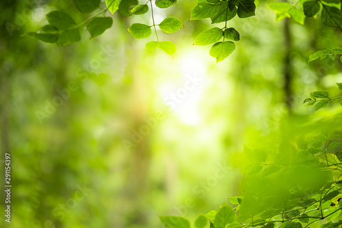 Recess Fitting Pistachio Closeup beautiful view of nature green leaves on blurred greenery tree background with sunlight in public garden park. It is landscape ecology and copy space for wallpaper and backdrop.