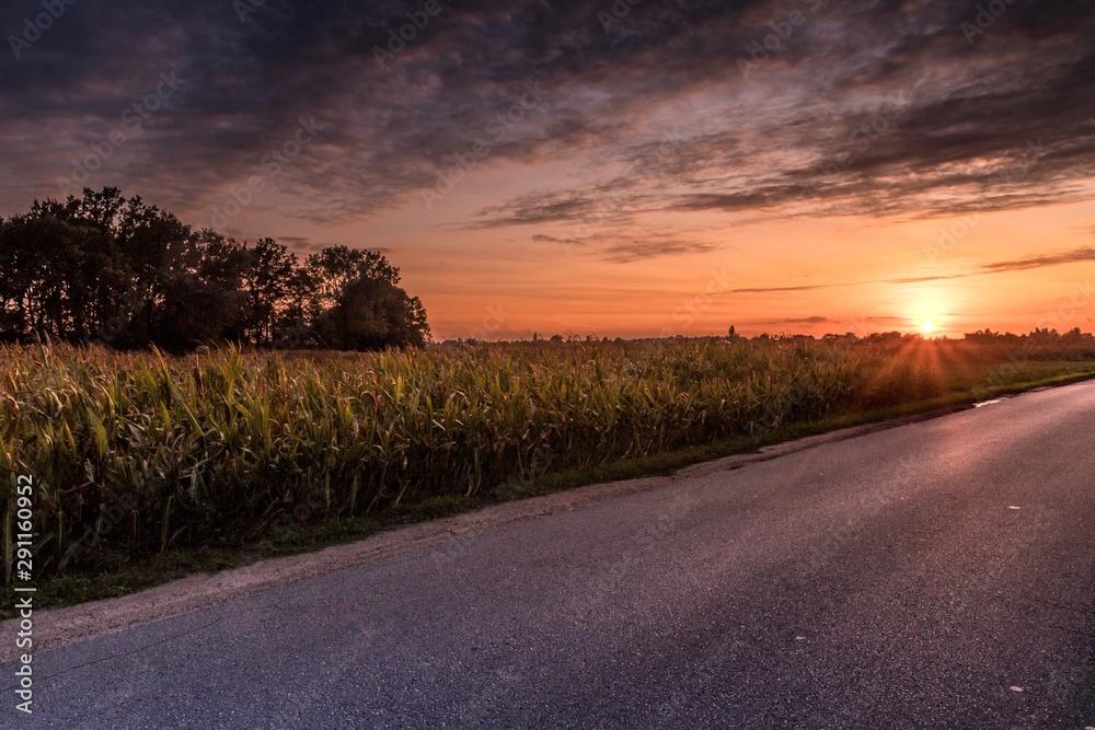Fototapeta asfaltowa droga wśród pól i zachód słońca na wsi