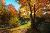 Sun rays through autumn trees. Natural autumn landscape in the forest. Autumn forest and sun as a background. Autumn landscape - image - 291179583