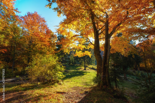 Sun rays through autumn trees. Natural autumn landscape in the forest. Autumn forest and sun as a background. Autumn landscape - image