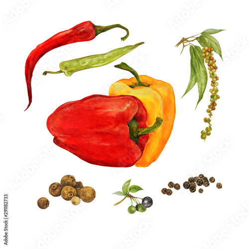 Photo different types of peppers, sweet, hot, chili, black pepper, allspice, set, wate