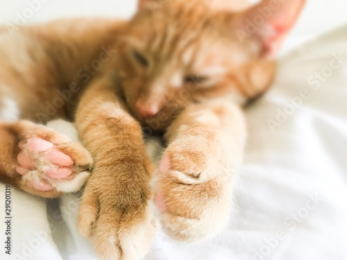 Tabby cat relaxing white background paws closeup Wallpaper Mural