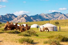 Mongolian Tent Near Little Gob...
