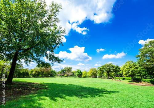 青空と木陰のある公園 Fototapet