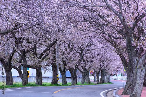 Poster Spring 봄