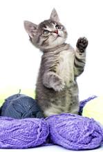 Little Kitten And Yarn Balls On White Background