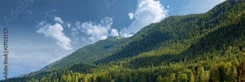 Vászonkép  Bosco di pini in montagna con cielo sereno, declivi e panorama