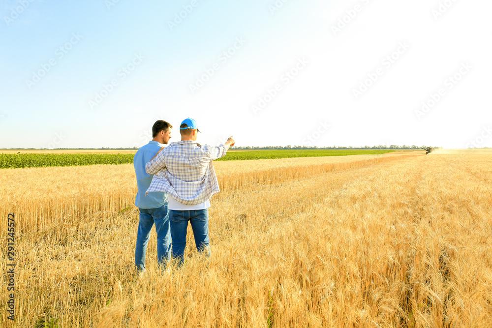 Fototapety, obrazy: Male farmers working in wheat field