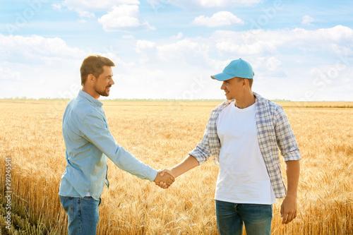Fototapeta Male farmers shaking hands in wheat field obraz