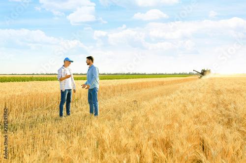 Fotomural  Male farmers working in wheat field