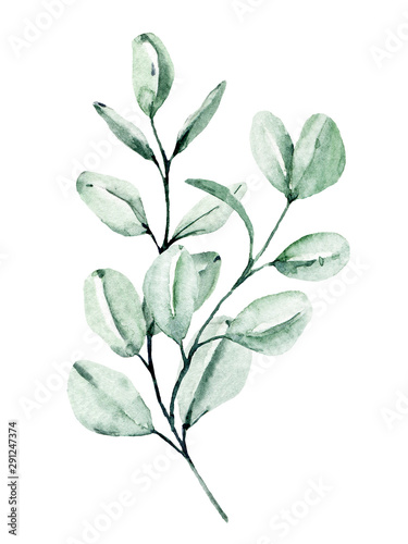 Fototapety, obrazy: Eucalyptus watercolor leaves. Hand painting botanical illustration. Leaf isolated on white background.