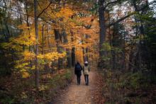 Beautiful Fall Autumn Landscap...