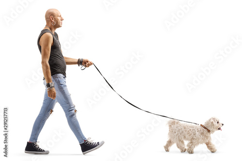 Fototapeta Hipster man walking a small white dog obraz