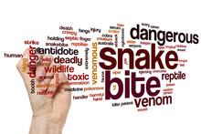 Snake Bite Word Cloud