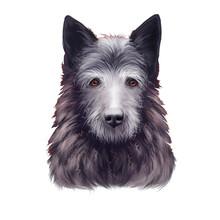 Bouvier Des Ardennes Dog Breed...