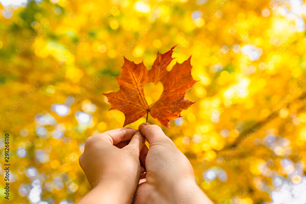 Fototapety, obrazy: yellow maple leaf in hand with heart in the middle