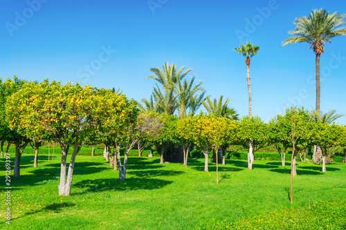 Beautiful parks and gardens in Marrakesh Canvas