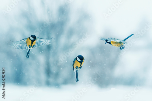 Fotobehang Vogel three birds little Tits fly in winter new year garden during snowfall spreading their wings