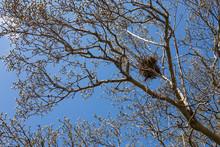 Magnolia Tree On US Capitol Gr...
