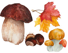 Illustration Of Forest Elements, Mashrooms, Chestnut And Leaves Made In Watercolor