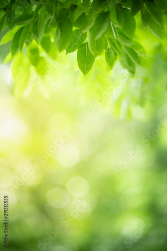 Closeup nature view of green leaf on blurred greenery background in garden with copy space using as background natural green plants landscape, ecology, fresh wallpaper concept. - 291313535