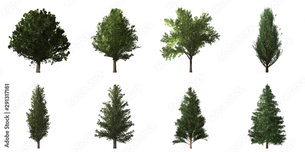 Fototapety, obrazy: Collection of isolated trees on white background