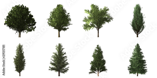 Fototapeta  Collection of isolated trees on white background
