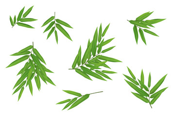 Bright fresh green bamboo leaves clipart kit on white background