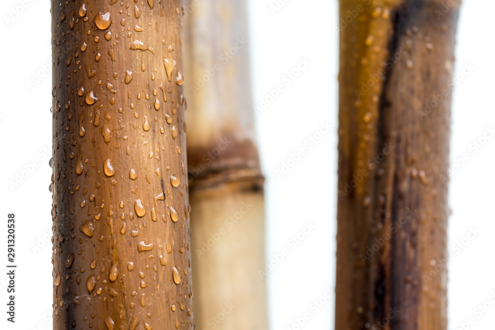 Bamboo varnished logs with white background and raindrops