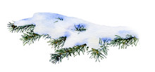 Picture Of A Snow-covered Spruce Branch Hand Drawn In Watercolor Isolated On A White Background