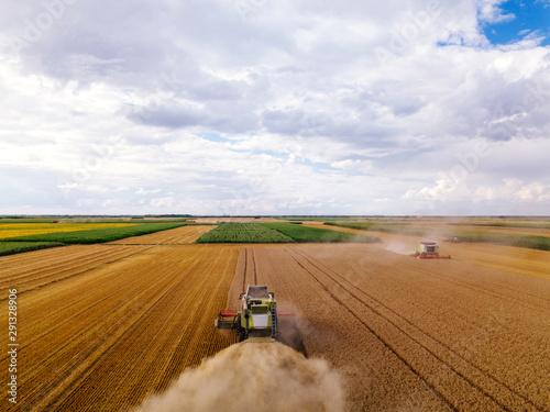 Fotografie, Obraz  The fields of gold