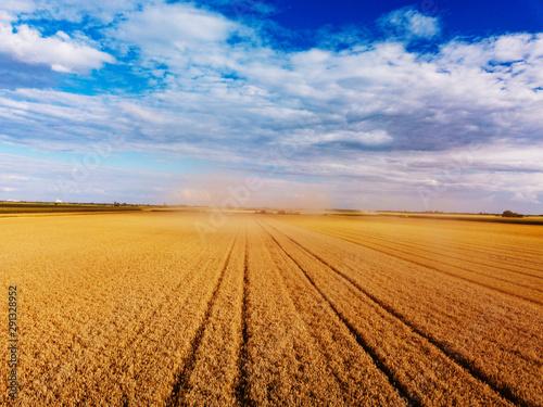 Fotografie, Obraz  Golden wheat field