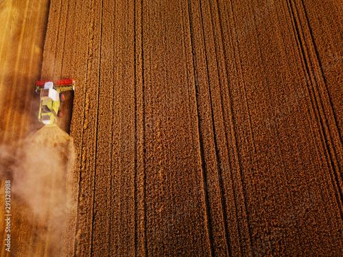 Fotografie, Obraz Wheat field ready for harvest
