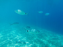 UNDERWATER View. Fishes In The...