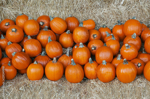 Orange round pumpkins with stems