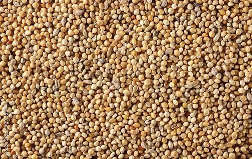 Fotomural Millet seeds background and texture
