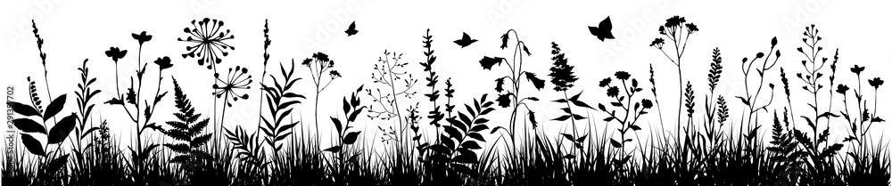 Fototapeta Background with black silhouettes of meadow wild herbs and flowers. Wildflowers. Floral background. Wild grass. Vector illustration.