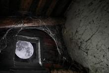 Moonlight Illuminates A Cobweb...