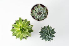 Top View Of Potted Succulent Plants Set Of Three Various Types Of Echeveria Succulents.