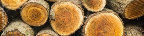 Poster Firewood texture banner of Background of dry chopped firewood logs stacked up on top of each other in a pile