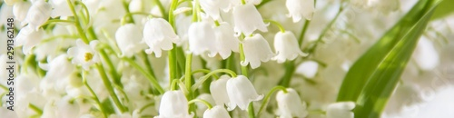 Photo banner of Lily of the valley flowers