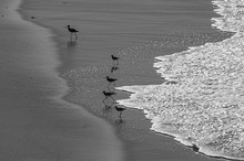 Birds Running From Incoming Ocean Wave