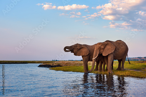 two-adult-elephants-and-a-small-one-loxodonta-africana-drink-along-the-banks-of-an-african-river