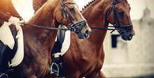 Equestrian Sport. Portraits Of...