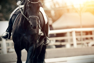 Equestrian sport. Portrait sports black stallion in the bridle. The leg of the rider in the stirrup, riding on a red horse.