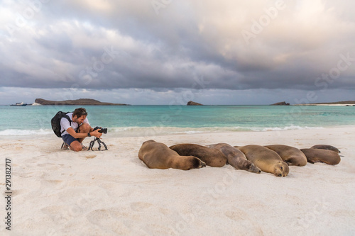 Animal wildlife nature photographer tourist photographing Galapagos Sea Lion in sand lying on beach on Gardner Bay Beach, Espanola Island, Galapagos Islands, Ecuador, South America.