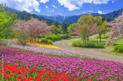 Obraz na plátně  長野県・春の国営アルプスあづみの公園