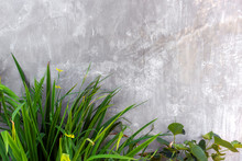 Outdoor Wall In Modern With Concrete Blocks And Vertical Garden
