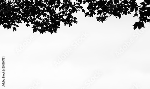 Fotomural  Abstract background of maple leaves silhouette
